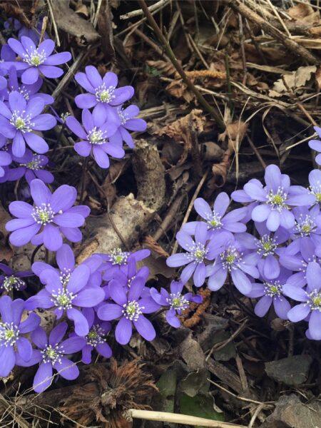 Settimana dei fiori